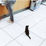 レジを待っている子猫さん♪【猫画像】