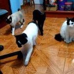 音をたてて、猫ちゃんを呼び込んだら可愛すぎる事になった!?