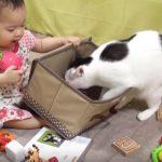 赤ちゃんと遊びたいネコちゃんが可愛い♪