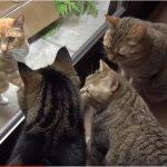 外に野良猫がやってきたら、「何?カワイイ子?」っと家猫ちゃん達が集まってきた