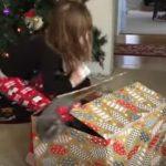 クリスマスに子猫のプレゼント、予想外の展開に・・・(*´▽`*)