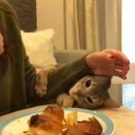 クロワッサンを巡る飼い主さんと猫ちゃんの攻防