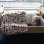 IKEA(イケア)で販売中の人形用ベッドの虜になる猫さん達