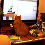 実はピタゴラスイッチの一部だった赤ちゃんとネコ