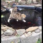 氷が張った池の上から、鯉を追い掛け回す猫ちゃん