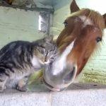 仲良しな馬とネコ