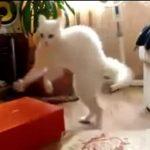 ビックリして二足歩行で逃げ出すネコ