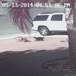 子供が野良犬に襲われているところを、体当たりで助け出すネコ