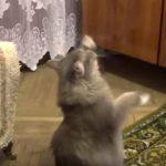 飼い主の歌にあわせて踊るネコちゃん