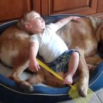 赤ちゃんにお腹をベッドにされても怒らない、優しいワンちゃん