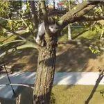 10Mほどの高い木から降りられなくなった2匹の子猫を発見、勇敢に救助する自転車乗りさん♪