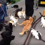 福井県にある猫寺の風景♪