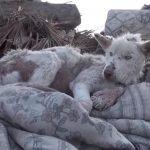 身勝手な飼い主に捨てられて、ゴミ山で生活していた犬を保護