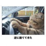 猫の画像でボケて!? 傑作選その2