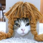 「どう?似合うかしら?」かつらで七変化する猫ちゃん
