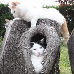 木の穴の中でリラックスして寝る猫さん