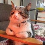 「あぁ・・気持ちいぃ・・」ストーブの前であたたまる猫ちゃん【猫画像】
