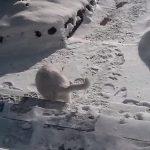ネコが雪景色を見て外に出たいと鳴くので、外に出したら一瞬で戻ってきた