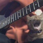 猫の子守歌?飼い主さんのギターで眠ってしまう猫ちゃん