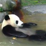 「極楽~♪」お風呂でくつろぐパンダさん
