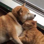 くっついて寝るネコちゃんとワンちゃんにほっこり(#^.^#)