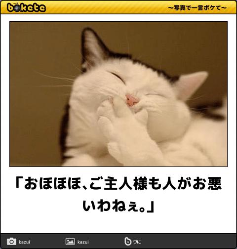 猫の画像でボケて!? 傑作選その8
